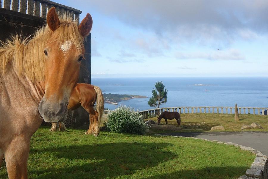 Cabalos en mirador